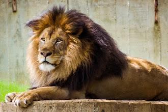 Photo: King of the Concrete Jungle -- Washington, D.C.