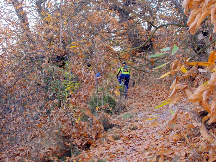 Castaños en otoño en El Pajariel