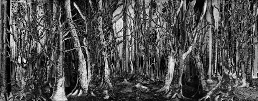 Wald der Vergänglichkeit