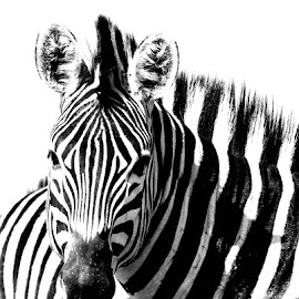 by Mariana Keller - Digital Art Animals (  )
