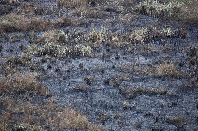 Photo: DSC_5295 (640x424) Banhado  queimado Foto Antonio Soler