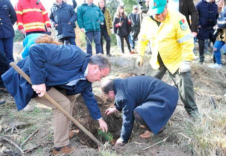 Lamego começou a plantar 1 milhão de árvores para salvar o clima
