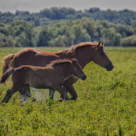 by Jasenka LV - Animals Horses