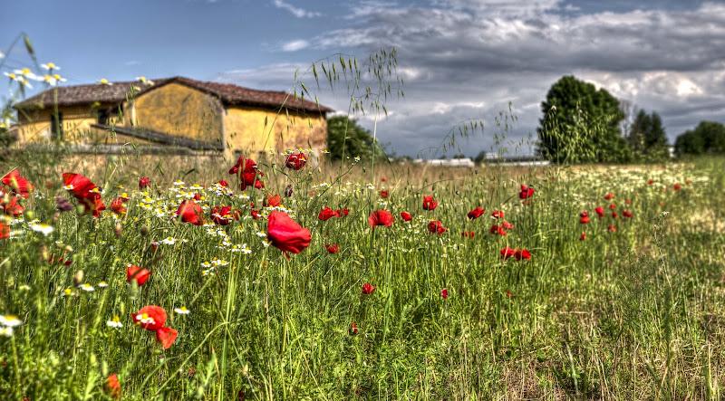 Primavera in fiore di Roberto Simonazzi