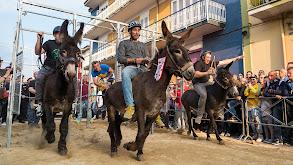 The Donkey Race thumbnail