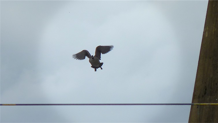 Yippee Flying.jpg