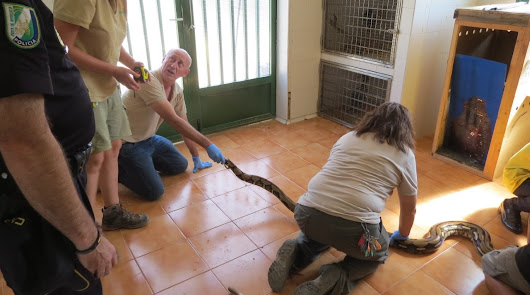 Hallan una serpiente pitón de más de tres metros junto a unos contenedores