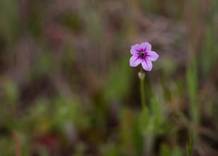Photo: I got the chance to shoot some wildflowers between the rain showers and egg hunts today.
