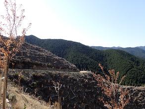 伐採斜面に桜の植樹