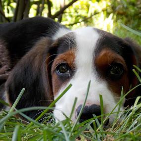 by OL JA - Animals - Dogs Portraits (  )
