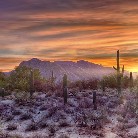 Desert Rise by Charlie Alolkoy - Landscapes Mountains & Hills ( clouds, sky, sunset, arizona, tucson, sunrise, landscape, cactus )