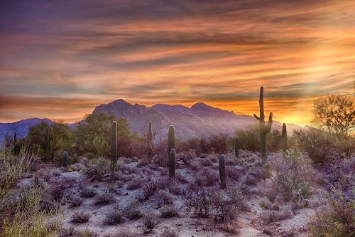 Desert Rise by Charlie Alolkoy - Landscapes Mountains & Hills ( clouds, sky, sunset, arizona, tucson, sunrise, landscape, cactus )
