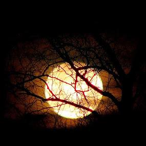 December Eclipse  by Carol Milne - Landscapes Starscapes