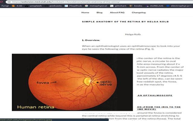 WebVision Enhance