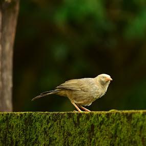 bird by Rahul Manoj - Novices Only Wildlife ( bird, sitting, tree, green, black )