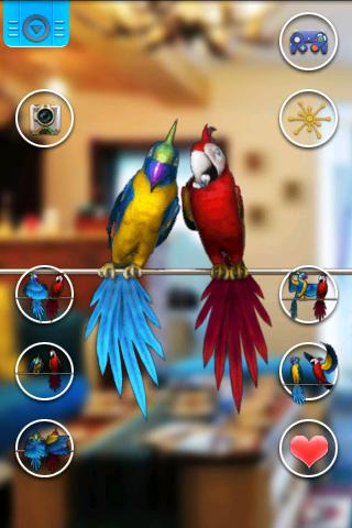 Talking Parrot Couple Free screenshots 2