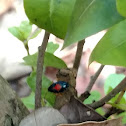 Key Largo Insect
