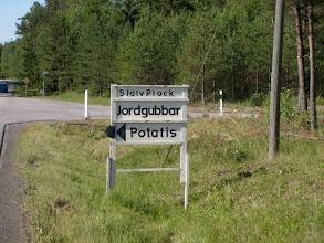 Photo: Rörmora gård självplock av jordgubbar och potatis.