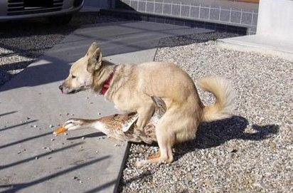 Cachorro com a pata fudida