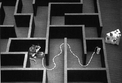 Renato no Labirinto