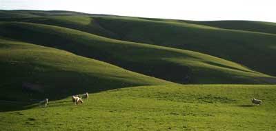 sheep400.jpg