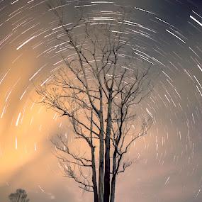... by Matheus Dalmazzo - Landscapes Starscapes ( itapetininga, time, arvore, tree, lapse, trail, estrela, star )