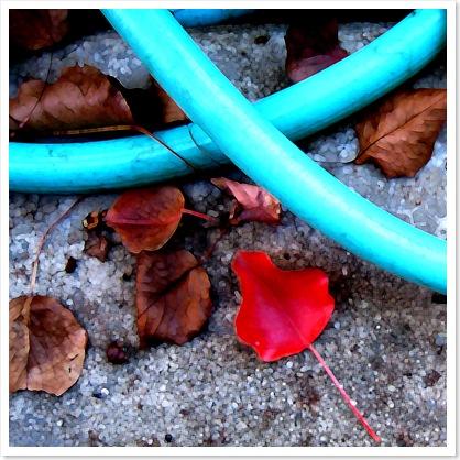hose in autumn3