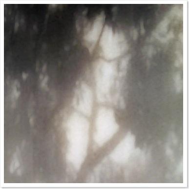 shadows - trees