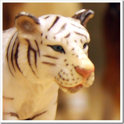 Brown ~ White Tiger