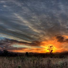 Fire Tree by David Morris - Landscapes Sunsets & Sunrises ( landscapes )