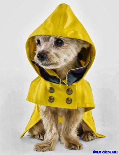 玩生活App|狗時裝設計免費|APP試玩