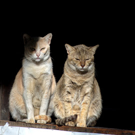 Two cats by Aung Kyaw Soe - Animals - Cats Portraits (  )