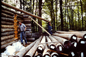 Photo: Skidding logs up onto the wall.