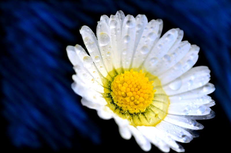 Spring flower di ekard89