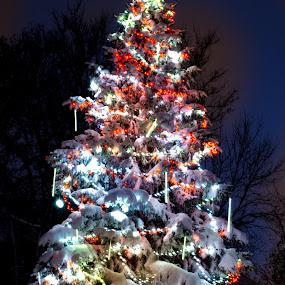 Summit Ave Christmas Tree by Jeremy Jordan - Public Holidays Christmas ( holiday, tree, christmas, summit, nikon )