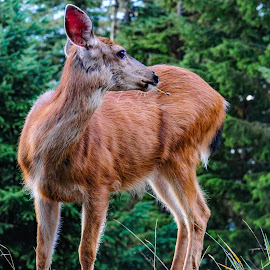 by Terry DeMay - Animals Other Mammals (  )