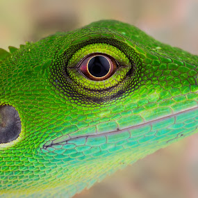 Little Dinosour by Tan Tc - Animals Reptiles ( lizard, nature, macro photography, reptile, close up )