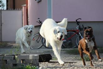 Photo: Ceasar, Viki a Jessica