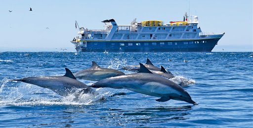 Dolphins go airborne in front of the National Geographic Sea Bird during a Lindblad-National Geographic expedition to Baja's Sea of Cortez.