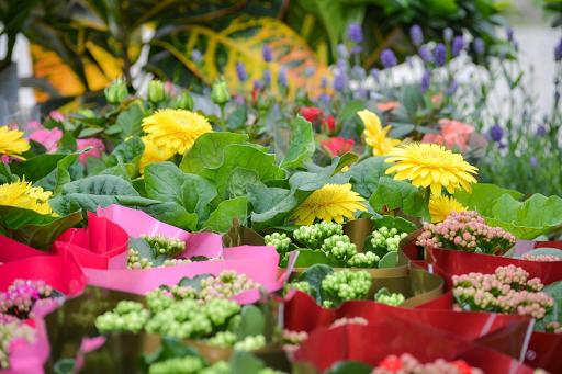 Cvjećare Budva, Nikšić, Kotor - Kako da se pobrinete za saksijsko cvijeće dok ste na odmoru