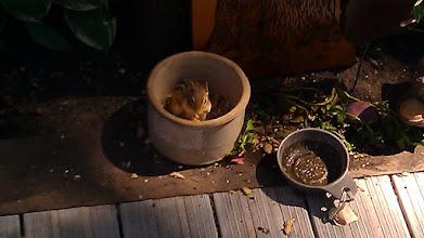 Photo: A chipmunk. Cute.