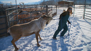 Running With Reindeer thumbnail