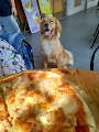Pizza Running 美村店