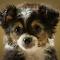 dos puppy 15 021_1 copy.jpg