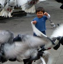 Photo: Pigeons fleeing boy