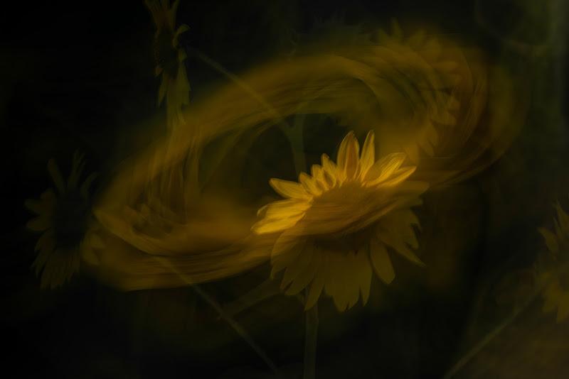 Dancing in the wind di loredana de sole