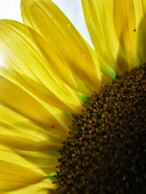 Photo: Close up of sunflower petals in the sun at Cox Arboretum in Dayton, Ohio.