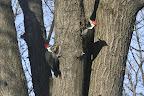 Birds-20071214-120.jpg