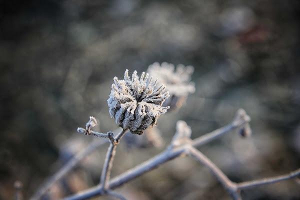 fiori di ghiaccio di antonioromei