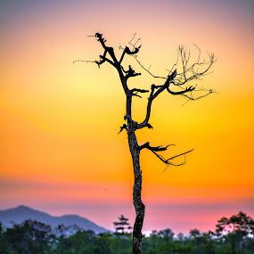 by Alexander Nainggolan - Nature Up Close Trees & Bushes ( paddy field, sunset, solitude,  )